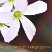 Fotowalk Palmengarten - Fotograf Albert Wenz