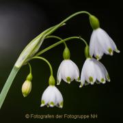 Fotowalk Palmengarten - Fotografin Jutta R. Buchwald