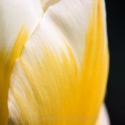 Fotowalk Palmengarten - Fotograf Joachim Würth