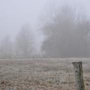 Nebel - Fotograf Albert Wenz