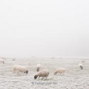 Nebel - Fotograf Thomas Stähler