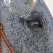 Monatsthema Tiere - Fotograf Albert Wenz