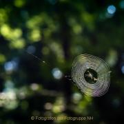 Monatsthema Zauberhaftes, Verträumtes - Fotografin Izabela Reich