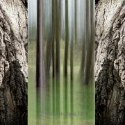Triptychon - Fotograf Joachim Clemens