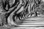 Thema Schatten -Fotograf Joachim Würth