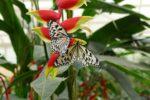 Schmetterlingspark Sayn