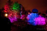 2015 Winterlichter im Palmengarten - Fotograf Joachim Würth