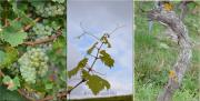 Triptychon - Fotograf Christoph Fuhrmann