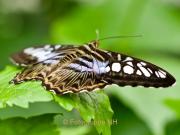 Fotowalk Schmetterlingspark Schloss Sayn - Fotograf Henry Mann