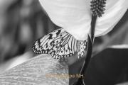 Fotowalk Schmetterlingspark Schloss Sayn - Fotograf Joachim Clemens