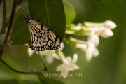 Fotowalk Schmetterlingspark Schloss Sayn - Fotografin Nicole Gieseler