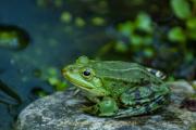 Monatsthema Tiere - Fotograf Clemens Schnitzler