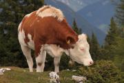 Monatsthema Tiere - Fotograf Helmut Joa
