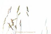 Monatsthema Gräser / Ähren - Fotografin Jutta R. Buchwald