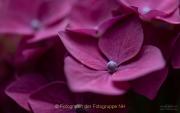 Monatsthema Blüten - Fotograf Clemens Schnitzler