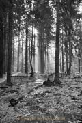 Monatsthema Wald - Fotograf Henry Mann