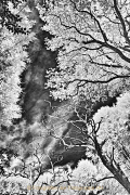 Monatsthema Wald - Fotograf Stefan Zimmermann