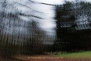 Fotowalk Mystischer Wald - Fotografin Jutta R. Buchwald