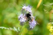 Monatsthema Insekten auf Blüten - Fotograf Olaf Kratge
