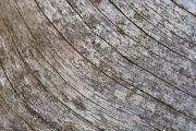 Monatsthemen Holzoberflächen - Fotograf Thomas Stähler