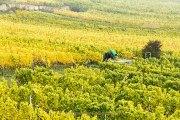 """Monatsthema """"alles was mit Wein zu tun hat"""" - Fotografin Jutta R. Buchwald"""