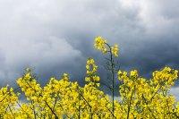 Fotografie und Poesie - Jutta R. Buchwald