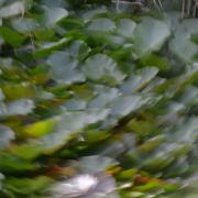 Fotowalk Koreanischer Garten - Fotografin Gaby Dudda