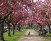 Frühling - Fotografin Anne Jeuk
