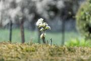 Frühling - Fotograf Clemens Schnitzler