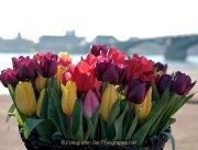 Frühling - Fotograf Henry Mann