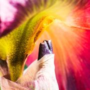 Fotowalk Darmstadt - Fotografin Jutta R. Buchwald