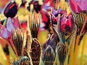 Farben - Fotografin Anne Jeuk