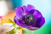 Farben - Fotografin Nicole Gieseler