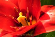Farben - Fotograf Werner Ch. Buchwald