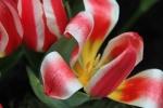 Frühjahr im Palmengarten - Fotograf Joachim Würth