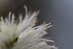 Frühjahr im Palmengarten - Fotografin Jutta R. Buchwald