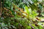 Frühjahr im Palmengarten - Fotograf Michael Häckl