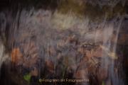 Fotowalk Theisstal - Fotograf Olaf Kratge