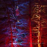 Winterlichter im Palmengarten - Fotograf Helmut Joa