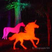 Winterlichter im Palmengarten Fotograf - Helmut Joa