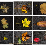 Fotowalk Bergpark Eppstein - Fotografin Nicole Gieseler