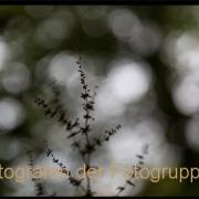 Fotowalk Bergpark Eppstein - Fotografin Jutta R. Buchwald