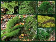 Fotowalk Bergpark Eppstein - Fotograf Helmut Joa
