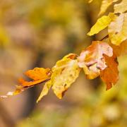 Fotowalk Herbstlicht im Oberjosbacher Wald - Fotograf Thomas Stähler