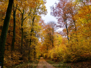 Fotowalk Herbstlicht im Oberjosbacher Wald - Fotograf Henry Mann