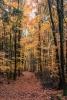 Fotowalk Herbstlicht im Oberjosbacher Wald - Fotograf Joachim Clemens