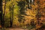 Fotowalk Herbstlicht im Oberjosbacher Wald - Fotografin Jutta R. Buchwald