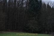 Fotowalk Mystischer Wald - Fotograf Christoph Fuhrmann