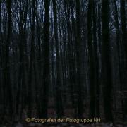Fotowalk Mystischer Wald - Fotograf Werner Ch. Buchwald