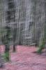 Fotowalk Mystischer Wald - Fotograf Albert Wenz